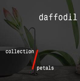 (Italiano) petals / daffodil